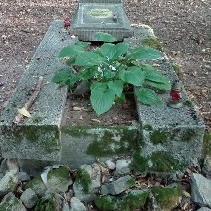 3. Ismeretlen katona sírja a Bánya-bükkben a K+ mentén